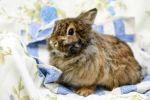 Kaninchen-1