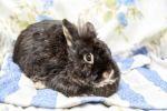 Kaninchen-6