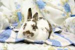 Kaninchen-7